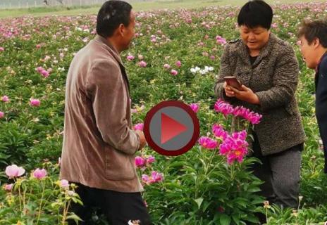 新蔡县杨庄户乡:那些花儿别样红